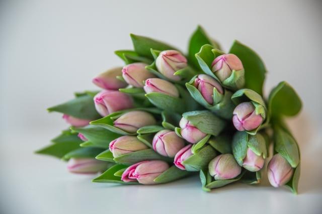 tulipaner-8117