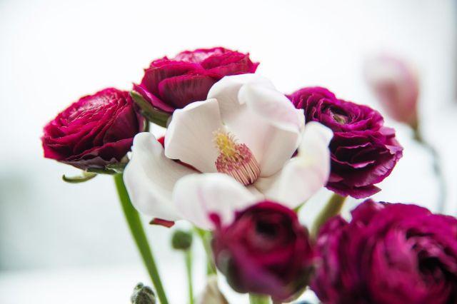 16.02.14_peoner_magnolia