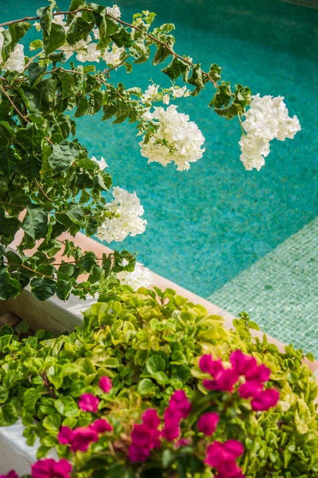 blomster_og_badebasseng_alzinaliving_T3A1410